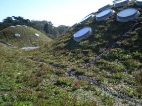 academy-of-sciences-green-roof