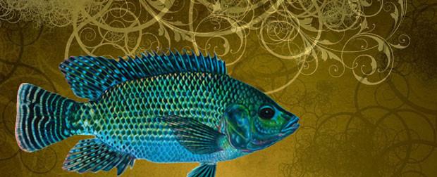 aquaponics homepagebanner2