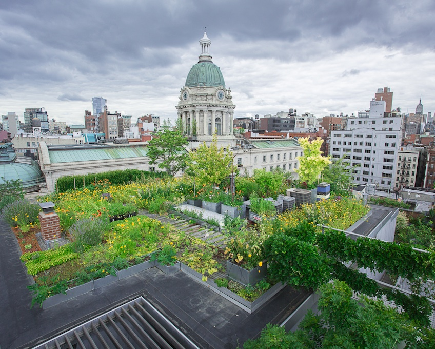 Green roof 39 s serve as vital wildlife habitat green for Green building articles