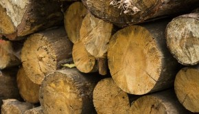 Forest timber from shutterstock_116774110