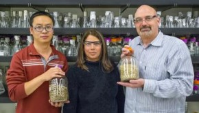 Caption: (From left) JBEI's Jian Shi, Seema Singh and Blake Simmons successfully used an ionic liquid to pre-treat mixed blends of biofuel feedstocks, a key to future commercialization.  Credit: Photo by Roy Kaltschmidt, Berkeley Lab