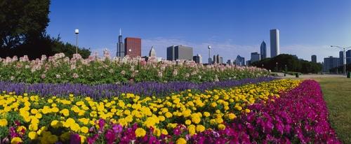 Chicago and garden