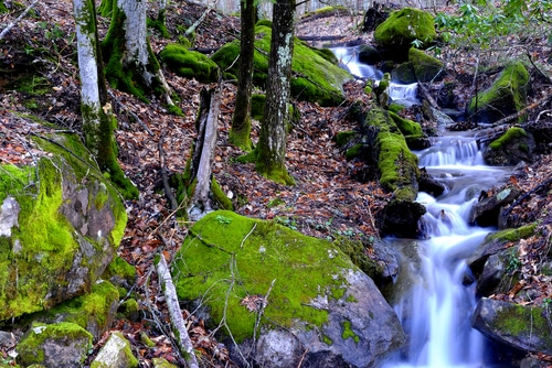 Spring, Rhododendron and stream, Monongahela National Forest, West Virginia, USA Shutterstock