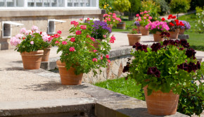 flower garden shutterstock_133557512