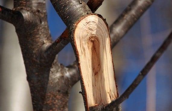 wood battery news