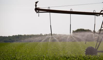 An irrigation system sprays water on a cornfield. Credit: Kansas State University Photo Services