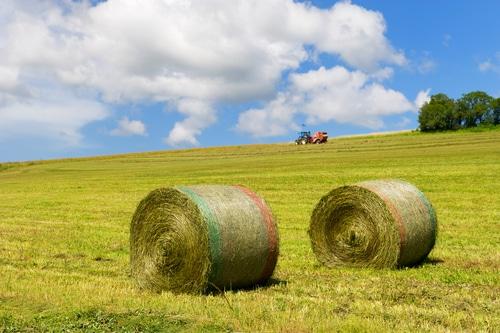 rolls in grass fields shutterstock_160240940