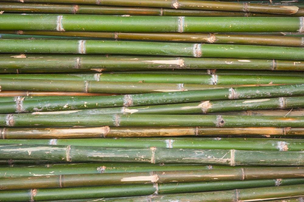 bamboo stack shutterstock_169327124