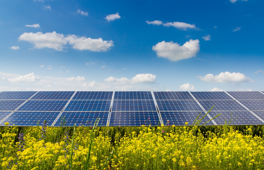 Solar panels and flowers from Shutterstock