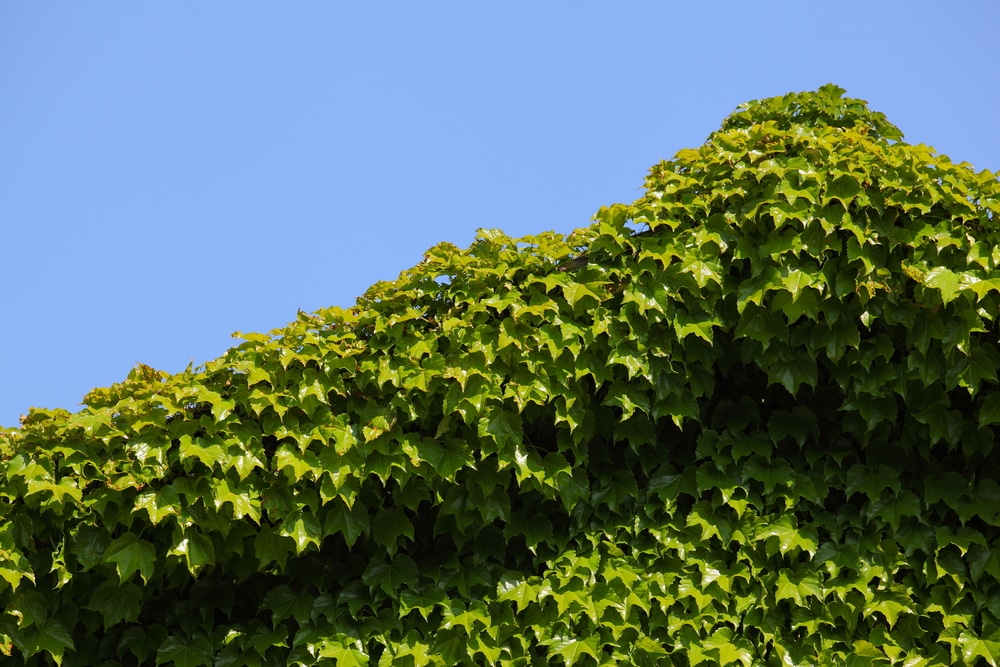 overgrown house and roof shutterstock_153511064 (1)