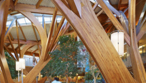 Wood creates a healty and healing environment