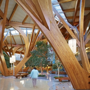 Design Wood Creates A Healty And Healing Environment