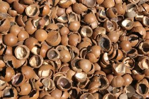 Macadamia nut shells are used for 3d printing of microtimber products.