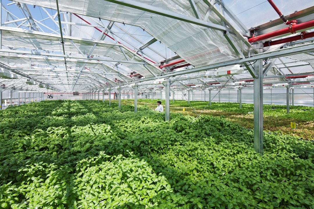 World's largest rooftop greenhouse.