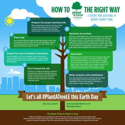 Celebrate Earth Day by planting a tree - the right way